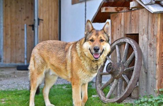 rasteinerhof-san-sigismondo-chienes29