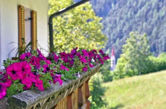 Sommerurlaub St.Sigmund . Kiens / Pustertal 7