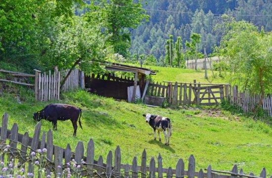 Urlaub auf dem Bauernhof im Pustertal 10