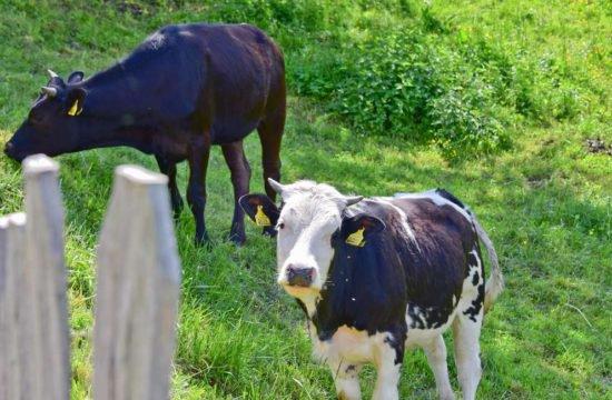 Urlaub auf dem Bauernhof im Pustertal 9